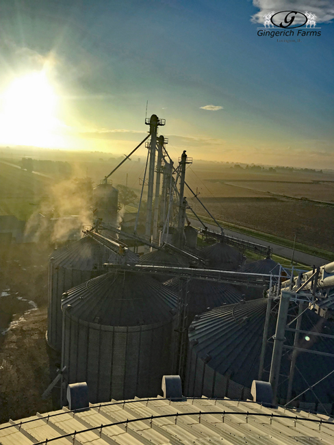 Harvest morning - Gingerich Farms