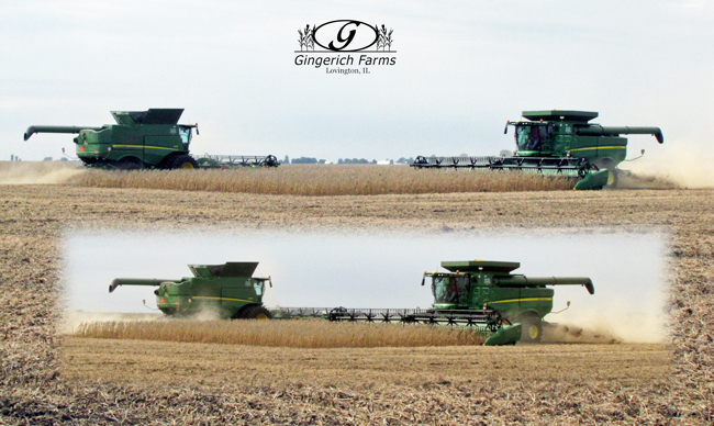 Bean harvest at Gingerich Farms