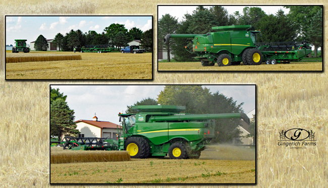 2nd wheat combine at Gingerich Farms