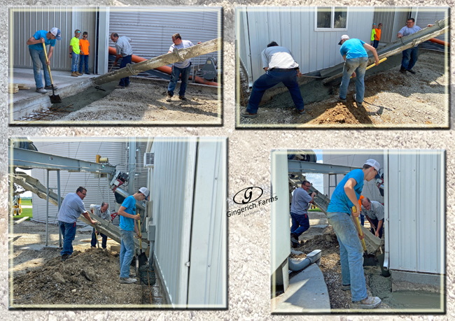 Concreting around GC - Gingerich Farms