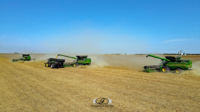 Bean harvest - Gingerich Farms