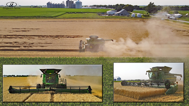 wheat harvest - Gingerich Farms