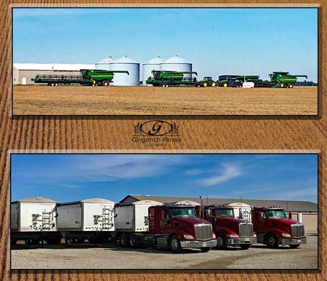 Combines & trucks at Gingerich Farms