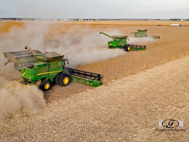 Bean Harvest - Gingerich Farms