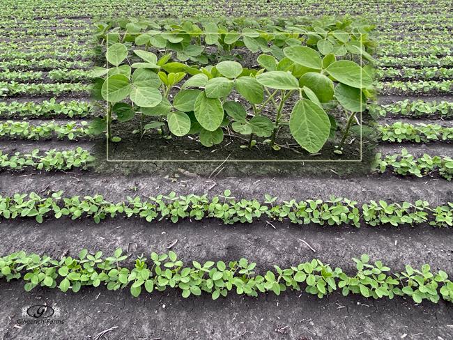 Beans - Gingerich Farms