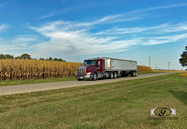 Loaded bean truck - Gingerich Farms