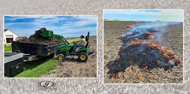 Removing bean stubble & burn stalks at Gingerich Farms