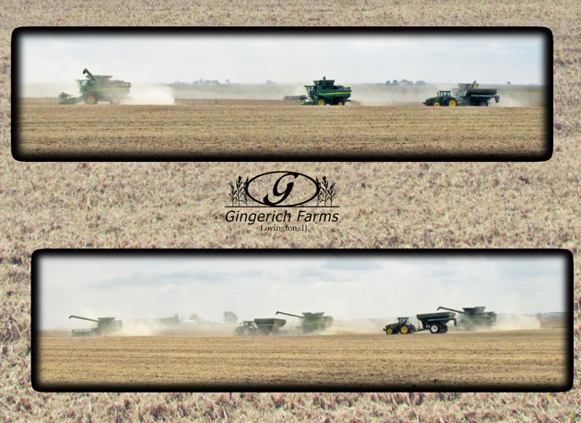 3 combines at Gingerich Farms