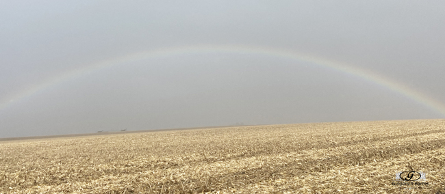 Harvesting under rainbow - Gingerich Farms
