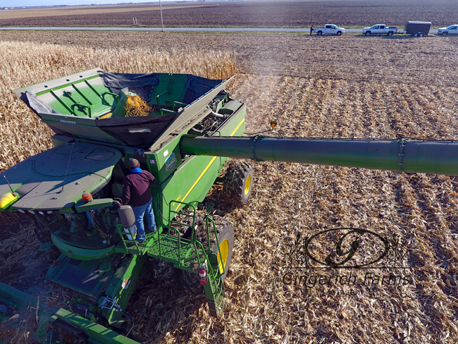 Corn plot at Gingerich Farms