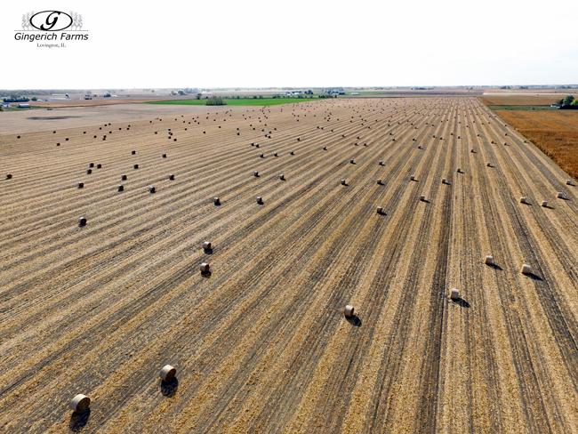 Corn bales at Gingerich Farms
