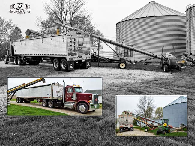 Emptying seed bean bin at Gingerich Farms