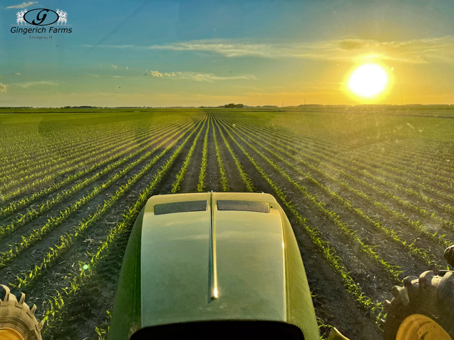 End of day sidedressing - Gingerich Farms