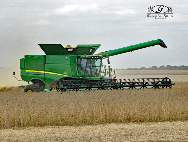Bean combine at Gingerich Farms