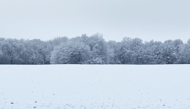 Snowy scene - Gingerich Farms