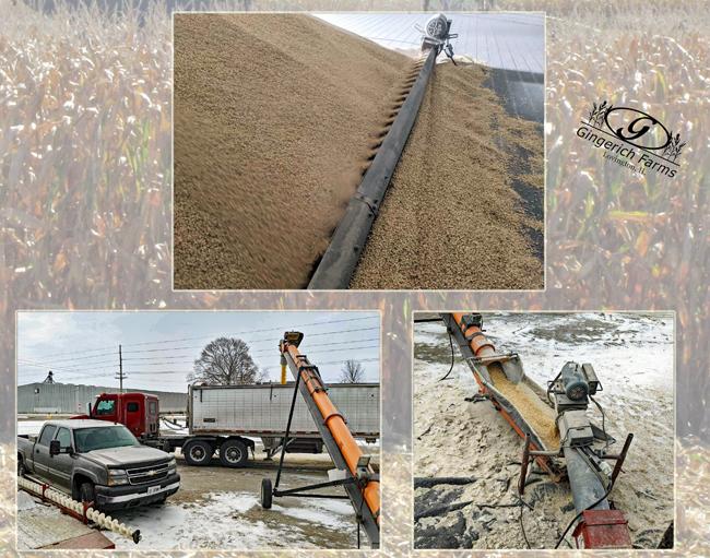Finish white corn bin - Gingerich Farms