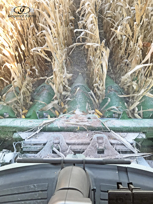 Corn head - Gingerich Farms