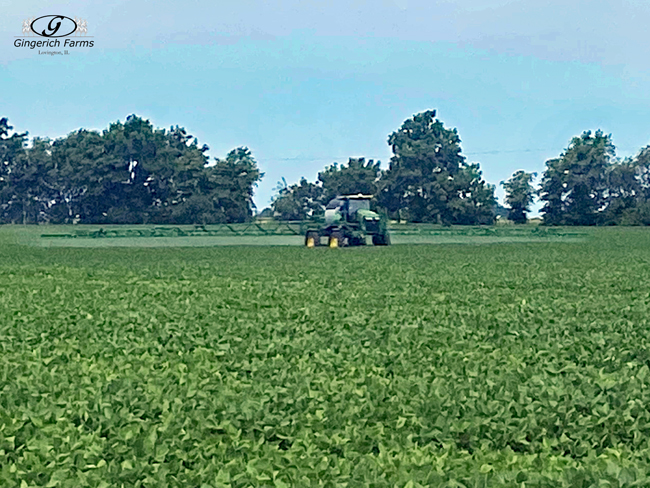 Bean fungicide - Gingerich Farms