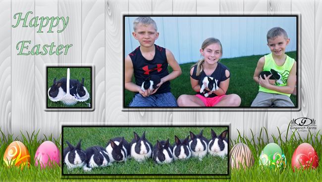 Bunnies at Gignerich Farms