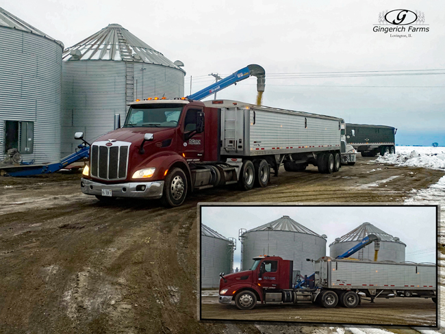 Hauling seed beans - Gingerich Farms