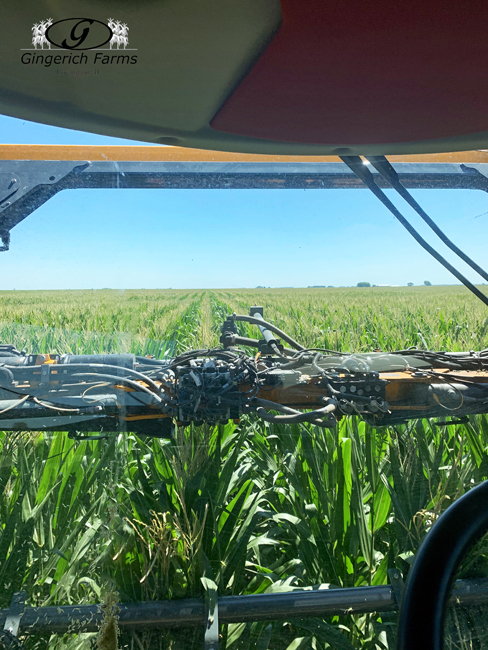 Fungicide spraying at Gingerich Farms