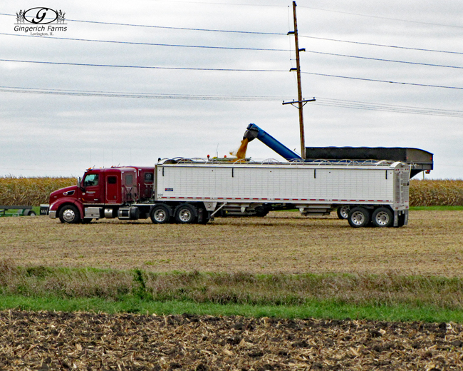 Loading truck at Gingerich Farms
