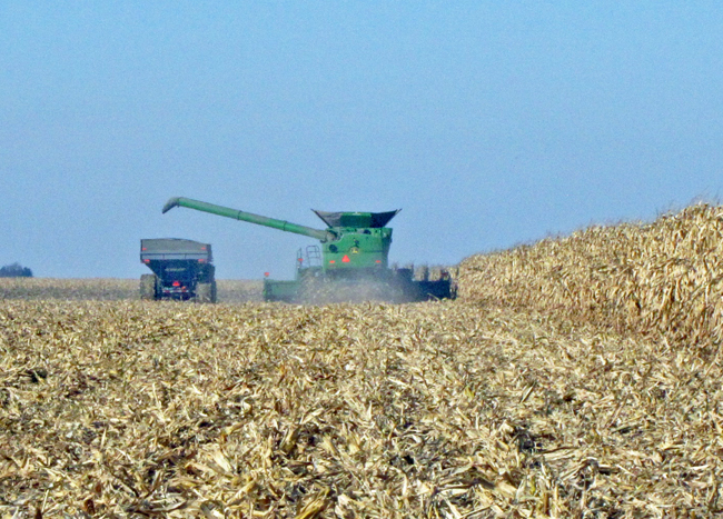 Harvest at Gingerich Farms