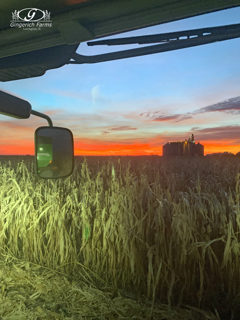 Corn Harvest at Gingerich Farms