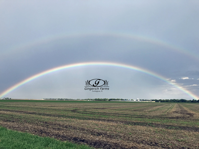 Rainbow at Gingerich Farms