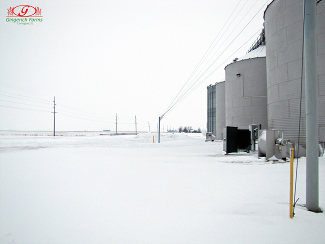 Snow at Gingerich Farms
