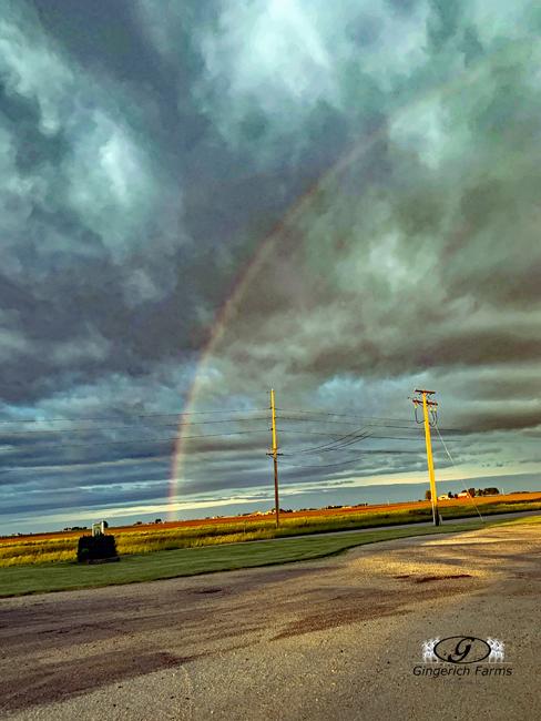 Rainbow at Gingerich Farms