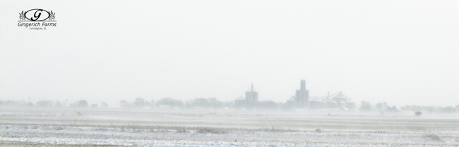 Blowing snow at Gingerich Farms