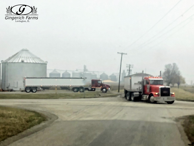 Trucks headed to elevator at Gingerich Farms