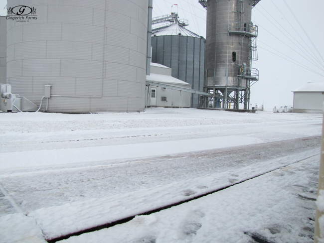 Snowed at Gingerich Farms