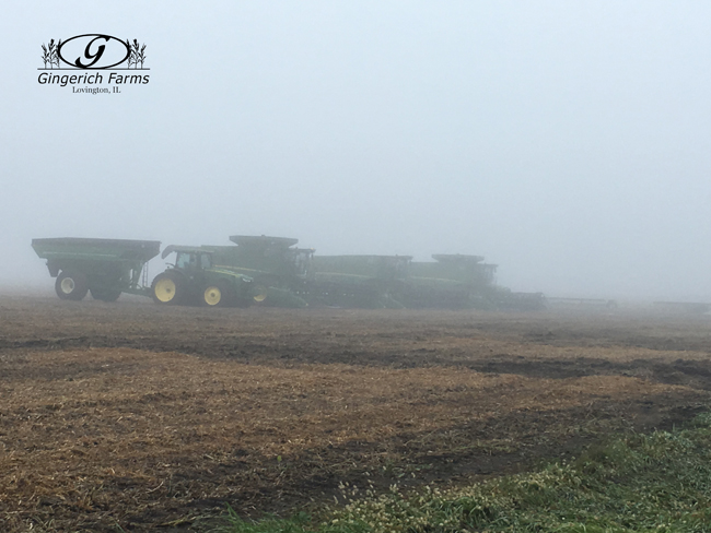 Foggy start at Gingerich Farms