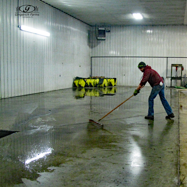 Cleaning shop floor at Gingerich Farms