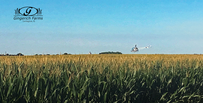 Helicopter spraying at Gingerich Farms