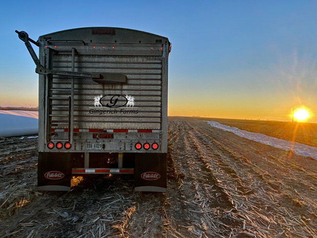 Early morning hauling - Gingerich Farms