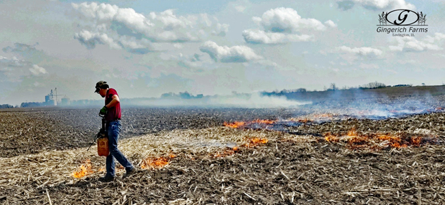 Burning corn stalks at Gingerich Farms
