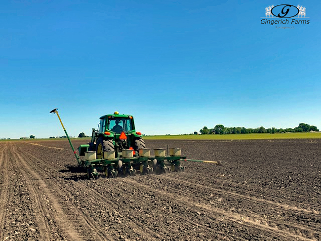Replant at Gingerich Farms