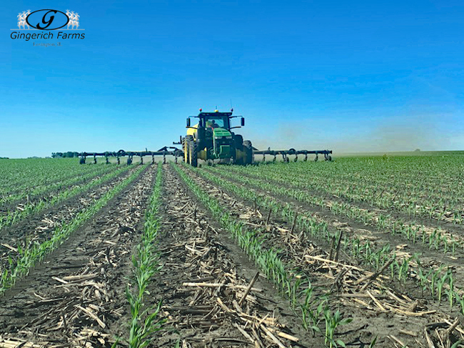 Sidedressing at Gingerich Farms