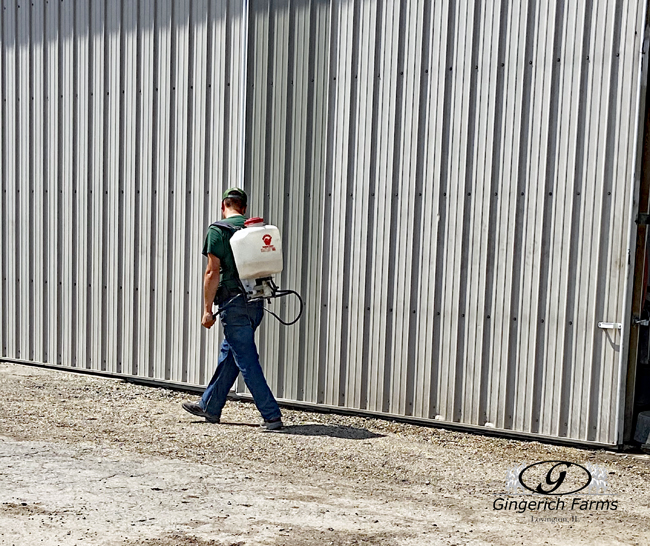 Spraying weed at Gingerich Farms