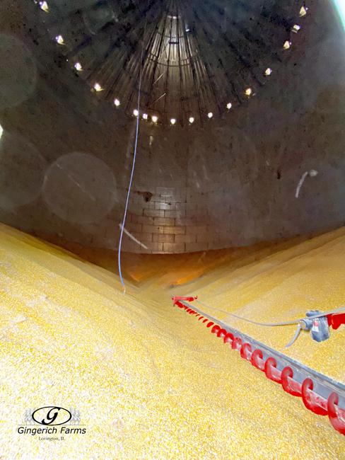 Remaining corn in bin at Gingerich Farms