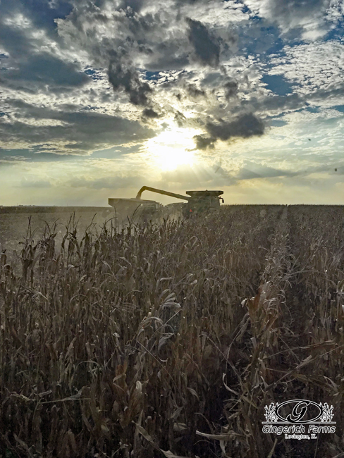 Ending corn harvest at Gingerich Farms