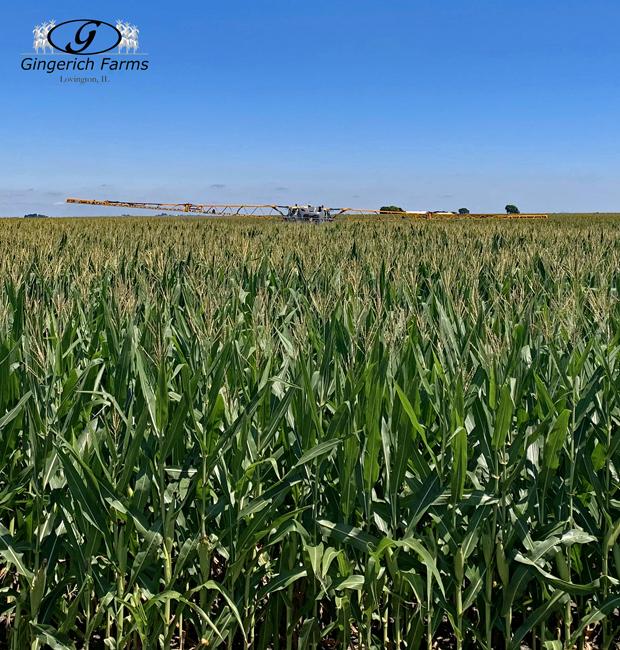 Corn fungicide spraying - Gingerich Farms