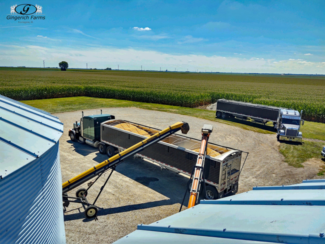 Loading out bin - Gingerich Farms