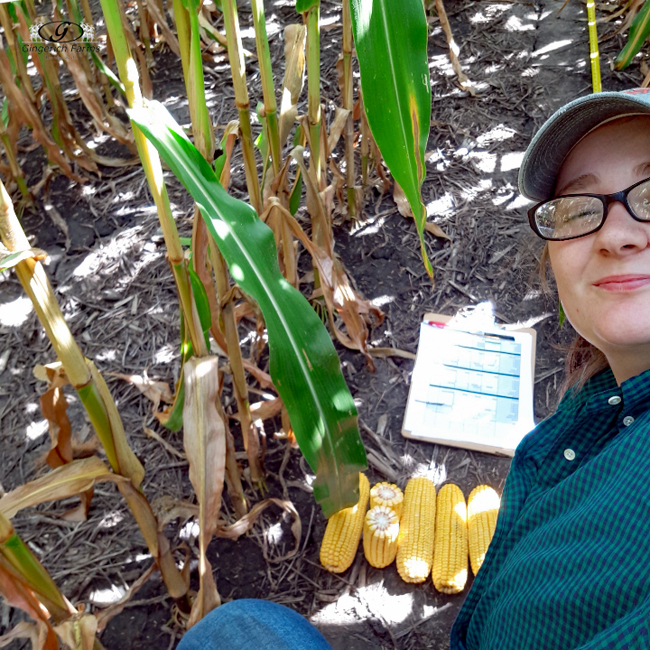Scouting - Gingerich Farms