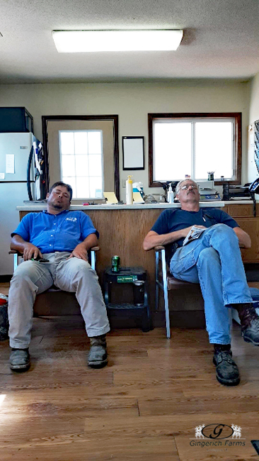 Catching up sleep - Gingerich Farms