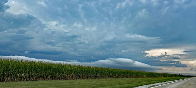 Cloud - Gingerich Farms