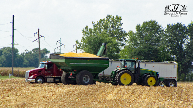 Loading grain truck at Gingerich Farms